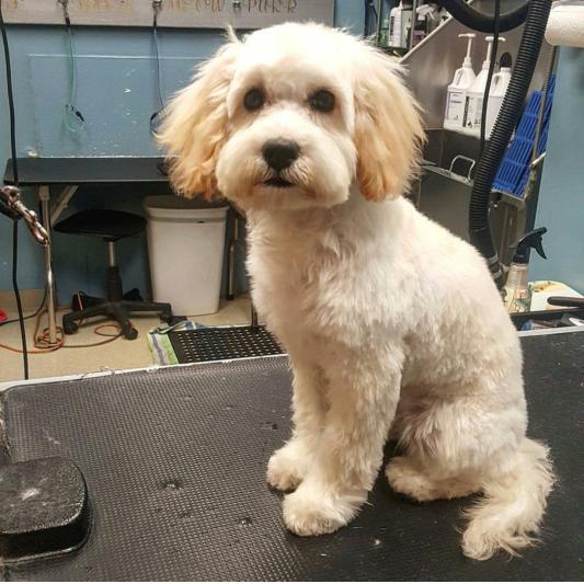 Puppy Cuts Divine Dog
